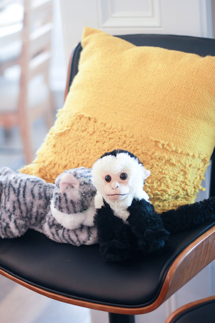 Gato e Macaco numa cadeira Friends
