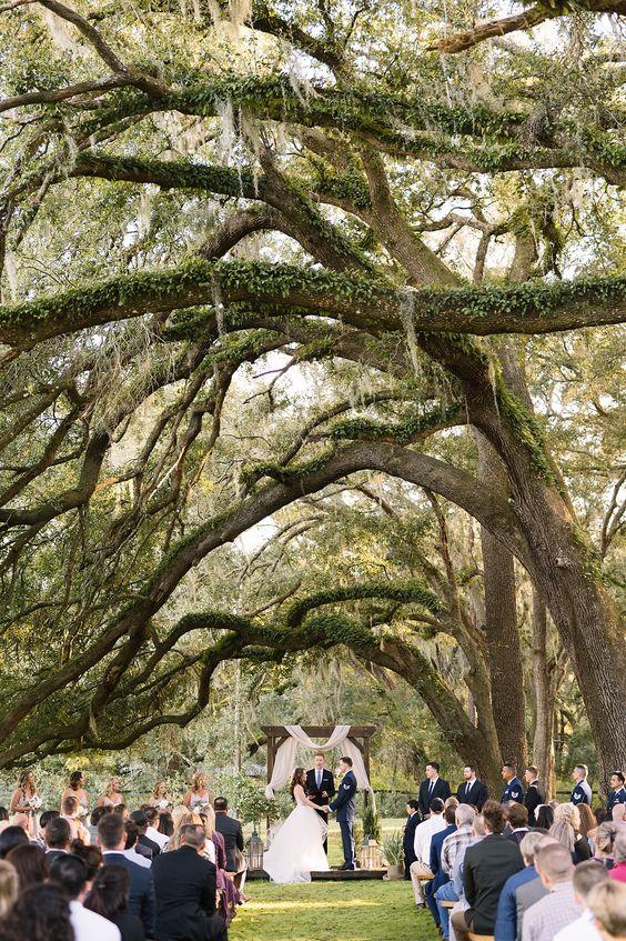 Floresta para casamento de Halloween