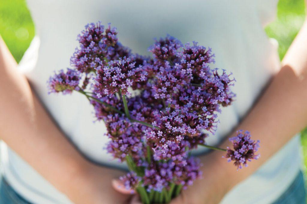 Bouquet de Verbena