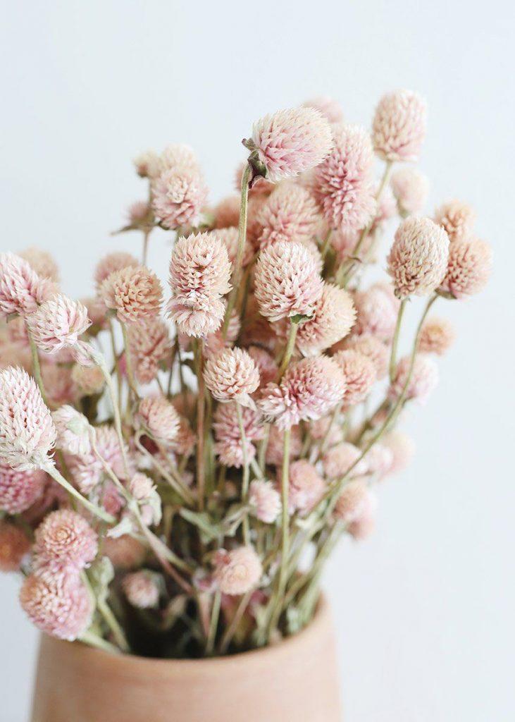 Bouquet de Perpétuas
